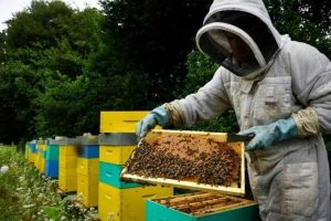 France Becomes The First Country In Europe To Ban All Pesticides Associated With Bee Deaths 1