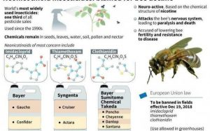 France Becomes The First Country In Europe To Ban All Pesticides Associated With Bee Deaths 2