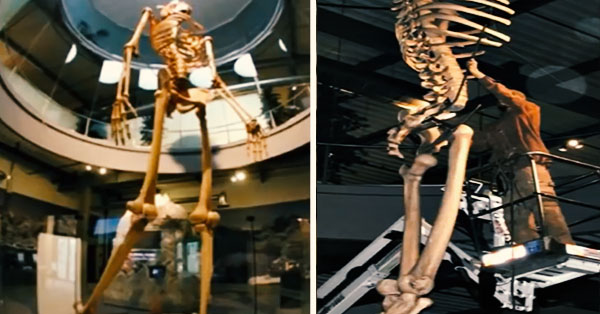 6751 - Ecuador shows the skeletons of a breed of giants 7 times more than a normal human