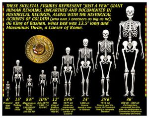 Ecuador shows the skeletons of a breed of giants 7 times more than a normal human 1
