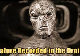 Creature Recorded in the Drainag 265x186 - Bizarre Reptilian Creature recorded in Drainage of UK (video)
