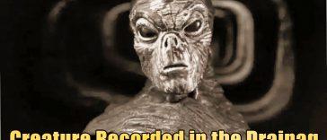 Creature Recorded in the Drainag 364x156 - Bizarre Reptilian Creature recorded in Drainage of UK (video)