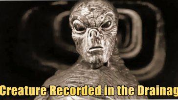 Creature Recorded in the Drainag 364x205 - Bizarre Reptilian Creature recorded in Drainage of UK (video)