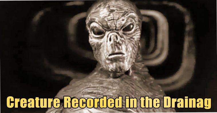 Creature Recorded in the Drainag 758x398 - Bizarre Reptilian Creature recorded in Drainage of UK (video)