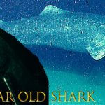 sark 150x150 - This is a 392 year old shark that was recently discovered in the Arctic Ocean.