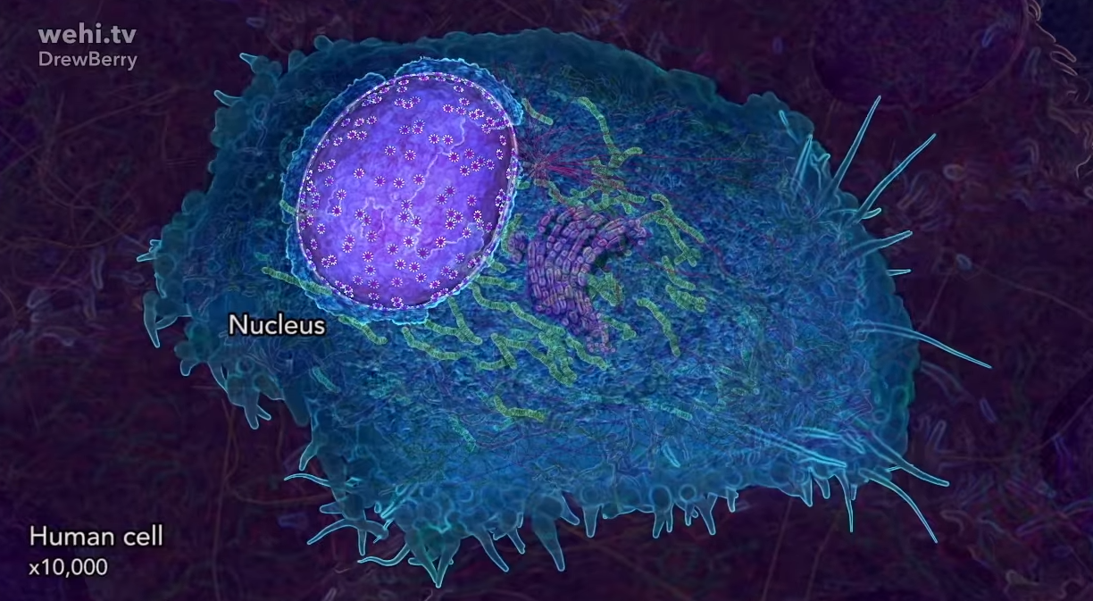 cell - Here are the most detailed images of the brain so far