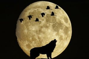 Full Wolf Moon Eclipse: On Friday, January 10, the moon will be full. 1