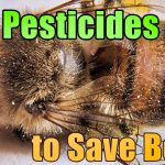 Ban pesticides to save bees 1 150x150 - France Becomes The First Country In Europe To Ban All Pesticides Associated With Bee Deaths