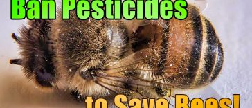 Ban pesticides to save bees 1 364x156 - France Becomes The First Country In Europe To Ban All Pesticides Associated With Bee Deaths