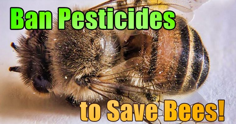 Ban pesticides to save bees 1 758x398 - France Becomes The First Country In Europe To Ban All Pesticides Associated With Bee Deaths