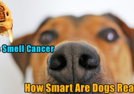 Dogs smell cancer 265x186 - Dogs smell cancer and experience human sadness