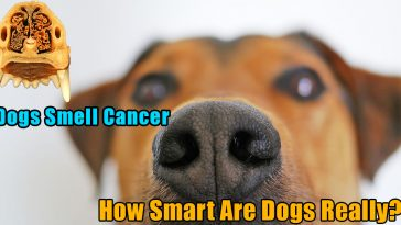 Dogs smell cancer 364x205 - Dogs smell cancer and experience human sadness