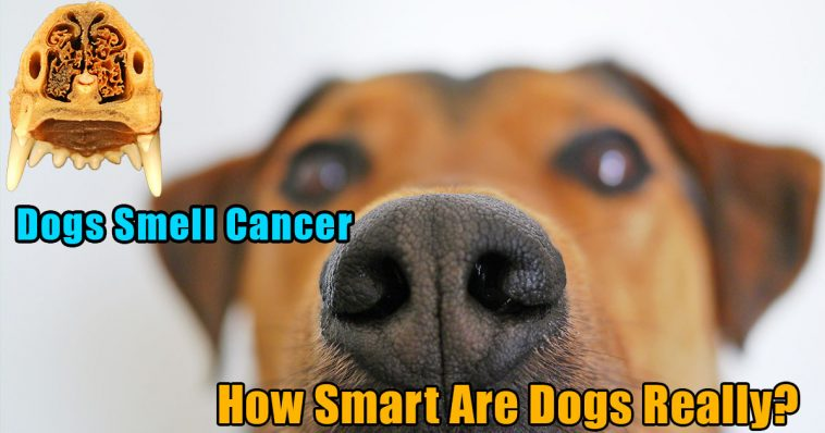 Dogs smell cancer 758x398 - Dogs smell cancer and experience human sadness