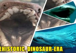 PREHISTORIC DINOSAUR ERA 265x186 - PREHISTORIC, DINOSAUR-ERA: This old shark with a snake head and 300 teeth is why we would just say no to the sea