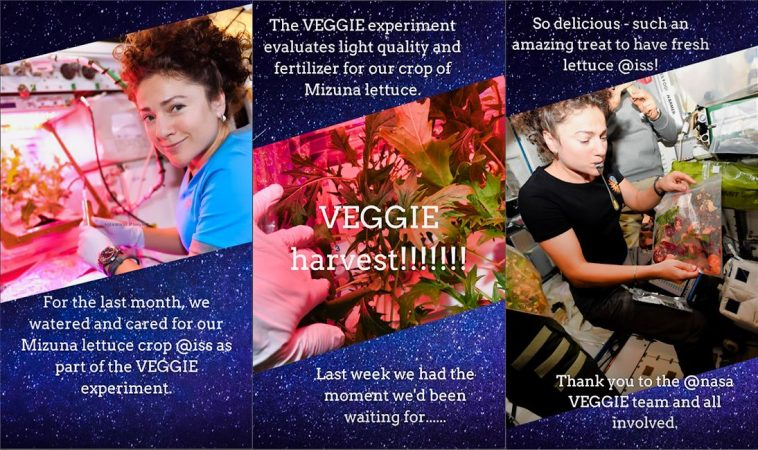 veggie 4 758x450 - Food in space: Harvest party at the International Space Station