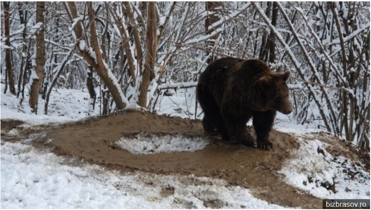 """433 758x429 - [VIDEO] The bear Ina """"lives"""" in an imaginary cage, after 20 years spent at the zoo in Piatra Neamţ"""