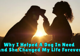 dodd 265x186 - Why I Helped A Dog In Need - And She Changed My Life Forever