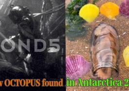 OctupuPreview 265x186 - New OCTOPUS found in Antarctica 2021