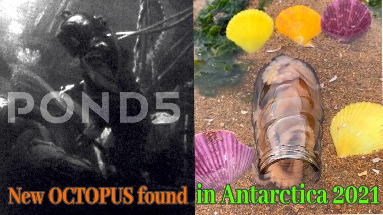 OctupuPreview 758x426 - New OCTOPUS found in Antarctica 2021